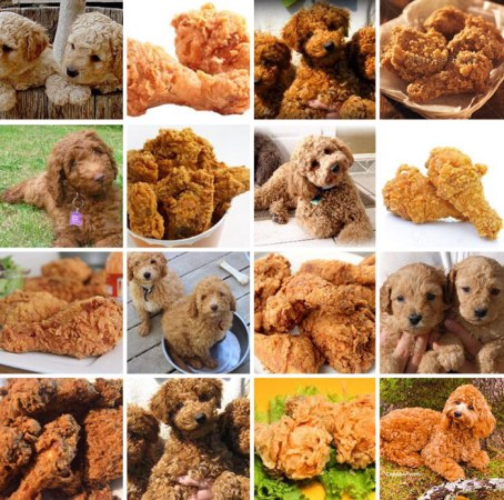 fried_chicken_or_dogs